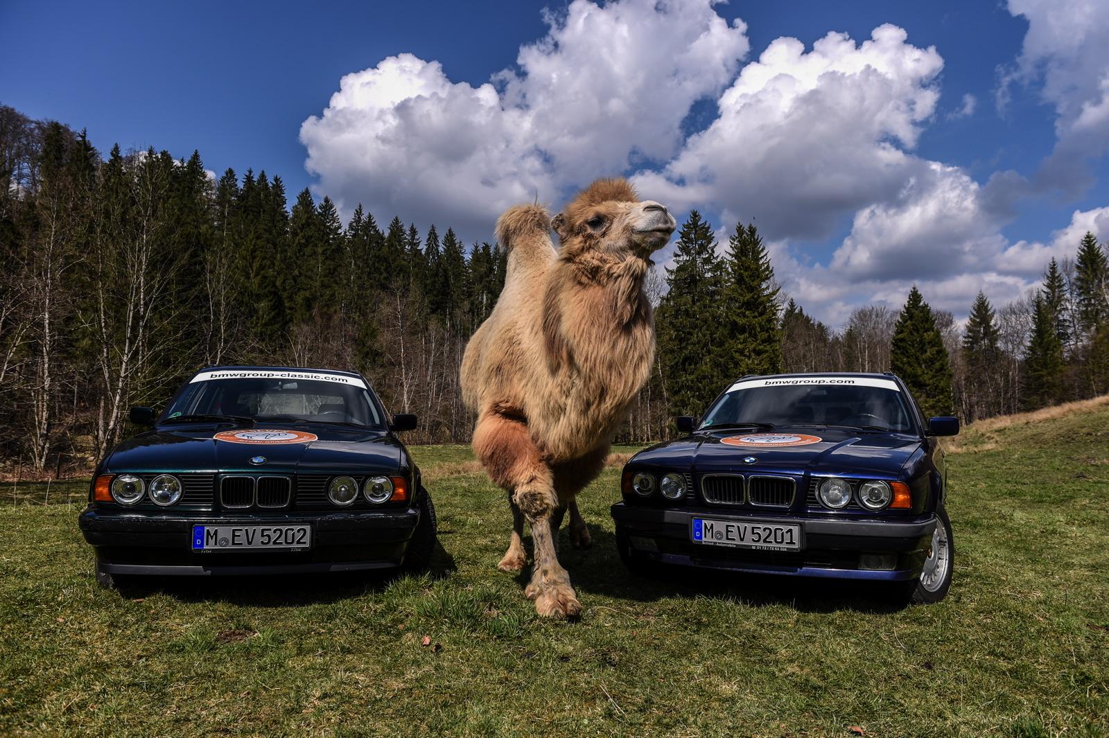 BMW Team 5ever 02