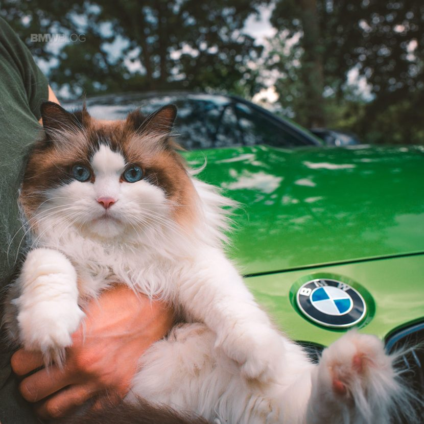 BMW cat day Java Green6 830x830