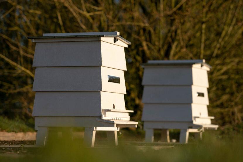 Rolls Royce Bees 3 830x553