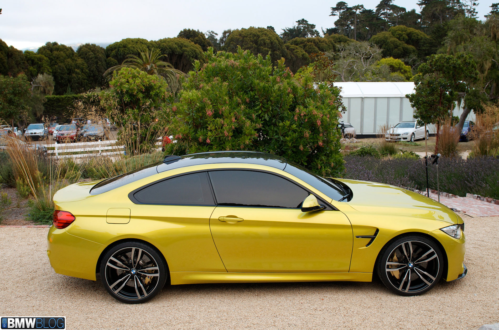 Real Life s BMW M4 Coupe at Pebble Beach